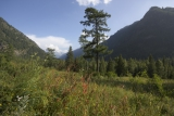 Долина р. Кучерла с невероятным количеством кузнечиков